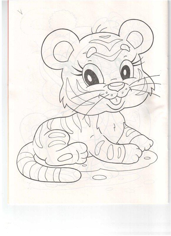 Раскраски львы и тигры | Солнушки